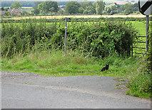 SO7729 : Footpath from Hethelpit Cross by Pauline E