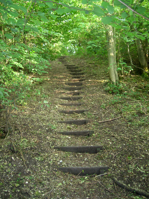 Steps, Unnamed Copse by Simon Carey