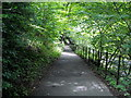 NS5860 : Riverside Path in Linn Park by Iain Thompson