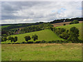 SU8799 : Pasture, Prestwood by Andrew Smith
