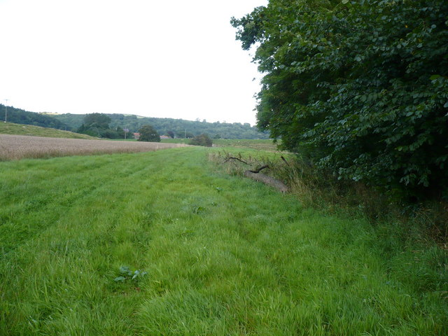 Field margin adjoining Craykeland Wood