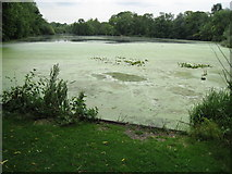 TQ0481 : Cowley: Little Britain Lake by Nigel Cox