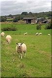 SE6691 : Pasture  Field Near Grays by Mick Garratt