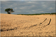 NT8862 : Farmland at Reston by Walter Baxter