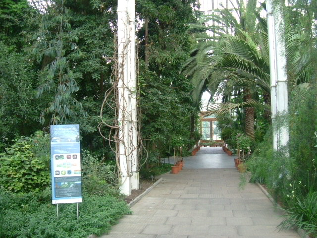Inside The Temperate House, Kew Gardens