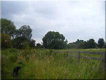 NZ4523 : Footpath by Billingham Beck by Ian Barton