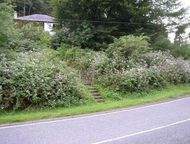 House hidden behind overgrown garden
