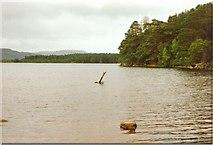NH9718 : Loch Garten by Sarah Charlesworth