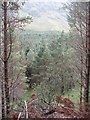NO2576 : Glen Doll Forest by Richard Webb