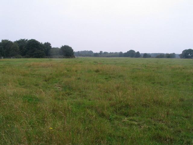 Grassland, Moor Farm nature reserve