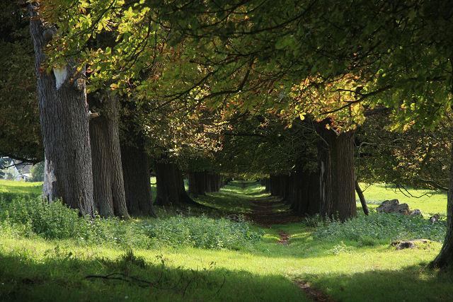 Footpath to Dalham