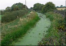 SK7431 : The disused Grantham Canal at Harby by Mat Fascione