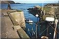 NT9267 : St Abbs Harbour by Sarah Charlesworth
