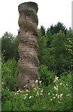 NY6491 : Kielder Column by Antonia