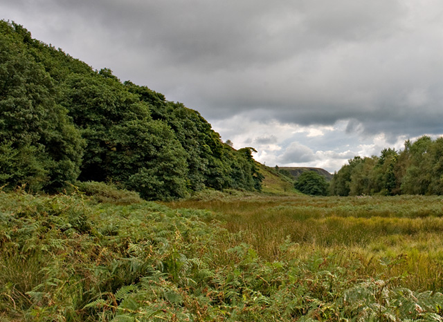 Looking towards White Coppice