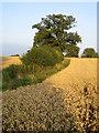 SP7222 : Footpath near Runt's Wood by Andy Gryce