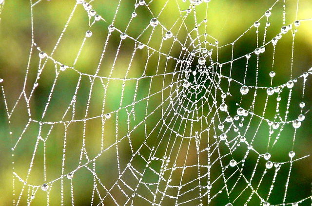 Close up of spider's web