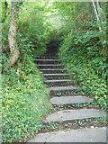 SX9265 : Steps on footpath below Babbacombe Downs by David Hawgood