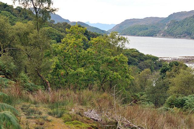 Ardmolich Wood and Loch Moidart