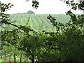 SO7961 : Woodhouse Farm orchards by Peter Whatley