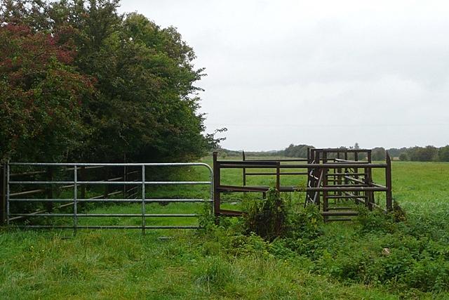 Pasture at Coologoriff