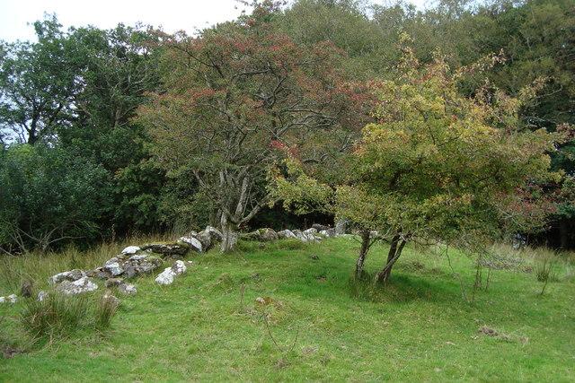 Fairy Trees near Greenan