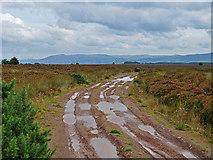 NN8812 : Moorland track south of Greenbog Wood by Dr Richard Murray