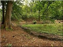SO5812 : Pool in Coverham Inclosure by Derek Harper