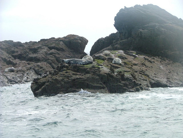Atlantic seals on The Carracks