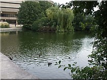 TQ1977 : Lake at the National Archives, Kew by John Lord