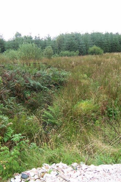 Overgrown Forest Stream