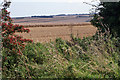 SE9238 : Crops on the Yorkshire Wolds by Peter Church