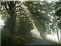 SK2084 : Morning Mist by John Fielding