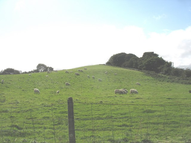 Grazing sheep on a drumlin