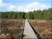 NS6351 : Boardwalk at Langlands Nature Reserve by Dannie Calder