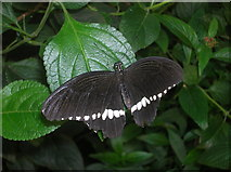 TQ2883 : Butterfly at London Zoo by Robin Sones