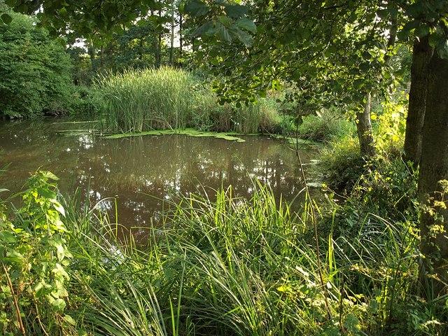 Pond, Charlie Ballard Nature Reserve