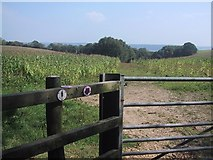 SY1192 : The East Devon Way drops down through the Maize by Sarah Charlesworth