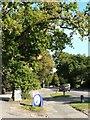 SZ0596 : Bearwood: post office oak tree by Chris Downer