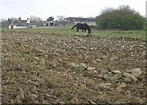 TM4494 : Church Farm by Graham Horn