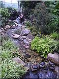 NJ9304 : Terrapins in David Welch Winter Gardens by Jenny Flett