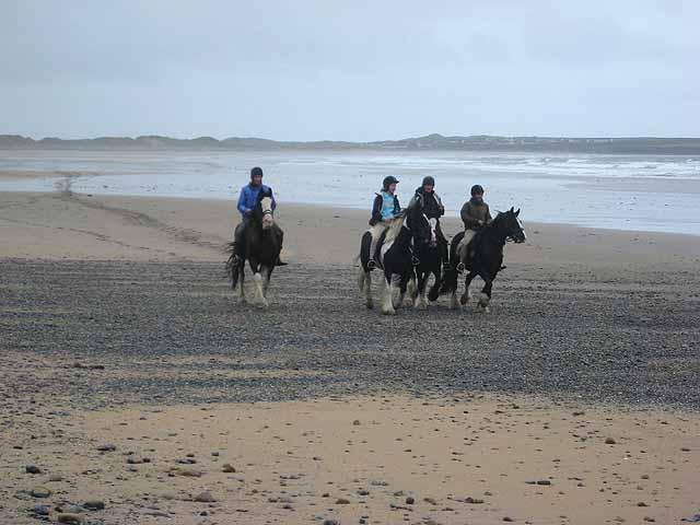 Horses on Back Strand