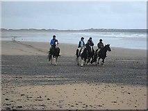 G6551 : Horses on Back Strand by Oliver Dixon