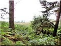 SJ5271 : Manley - view at the edge of the Delamere Forest by Mike Harris