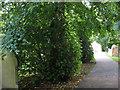 NZ3528 : Churchyard path by Stephen Craven