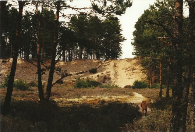Dune in the forest