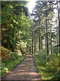 SJ2504 : Offa's Dyke path in Leighton Park woods by Penny Mayes