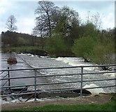 SE7365 : Weir on River Derwent near Kirkham Abbey by Irene Marlborough