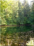 SJ2504 : Lower pool in Leighton Park woods by Penny Mayes