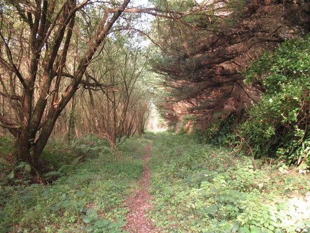 Morfa Harlech Forest